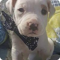 Adopt A Pet :: Dewayne - Louisville, KY