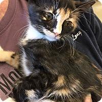 Adopt A Pet :: Casey - San Jose, CA