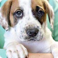 Adopt A Pet :: Flint - Memphis, TN