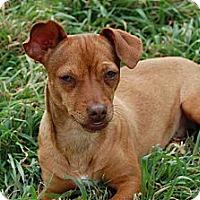 Adopt A Pet :: Reeses - Kempner, TX
