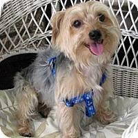 Adopt A Pet :: Harley - Leesburg, FL