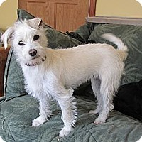 Adopt A Pet :: Portia - Adopted - Warwick, NY