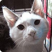 Adopt A Pet :: Wally - Brooklyn, NY