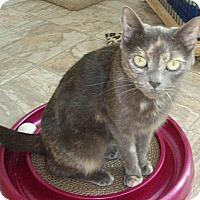 Adopt A Pet :: Stella - Germansville, PA