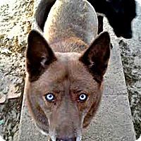 Adopt A Pet :: Socks - Silsbee, TX