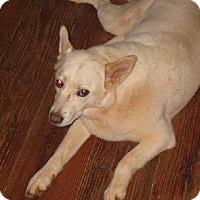 Adopt A Pet :: GRETA - Douglasville, GA