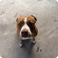 Adopt A Pet :: Leo - Surprise, AZ