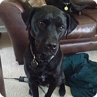 Adopt A Pet :: Bailey & Marerick - Columbus, IN