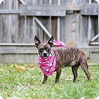Adopt A Pet :: Sweet Pea - Delaware, OH