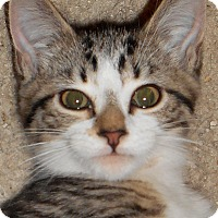 Adopt A Pet :: Tara - Chattanooga, TN