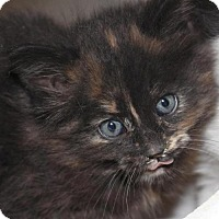 Adopt A Pet :: Snickers - Hamilton, ON
