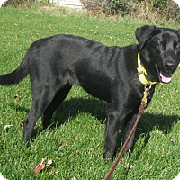 Adopt A Pet :: Betsy-adoption pending - Schaumburg, IL