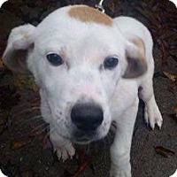 Adopt A Pet :: Bentley - Homer, NY