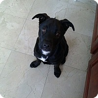 Adopt A Pet :: Ansley - Orlando, FL