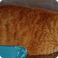 Adopt A Pet :: MOE - Brooksville, FL
