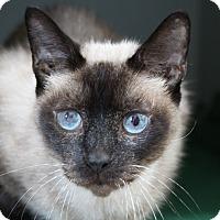 Adopt A Pet :: Samurai - Sarasota, FL