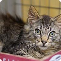 Adopt A Pet :: Chubbles - Alameda, CA