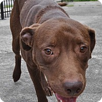 Adopt A Pet :: Hershey - Hardeeville, SC