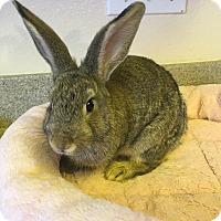 Adopt A Pet :: Aggi - Bonita, CA