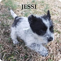 Adopt A Pet :: Jessi - Batesville, AR