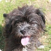 Adopt A Pet :: Mushu - Waco, TX