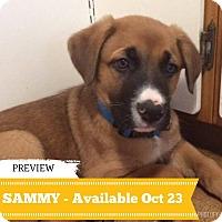 Adopt A Pet :: Sammy - Regina, SK