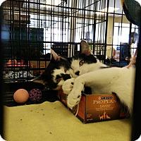 Adopt A Pet :: Salt - Avon, OH
