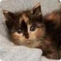 Adopt A Pet :: Cleopatra - DuQuoin, IL