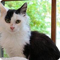 Adopt A Pet :: Beetlejuice - Ann Arbor, MI