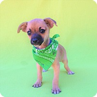Adopt A Pet :: Hector - Burbank, CA