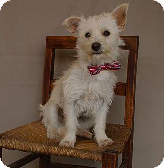 Cairn Terrier/Terrier (Unknown Type, Medium) Mix Dog for adoption in Carrollton, Texas - Markie