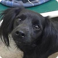 Adopt A Pet :: North - Springdale, AR