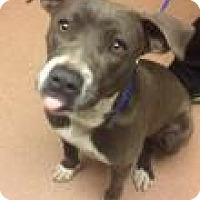 Adopt A Pet :: Penelope 3632 - Columbus, GA