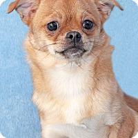 Adopt A Pet :: Catalina - Encinitas, CA
