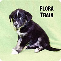 Adopt A Pet :: Flora Train - Sacramento, CA