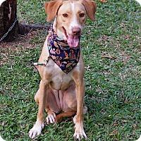 Adopt A Pet :: Ethel - San Mateo, CA