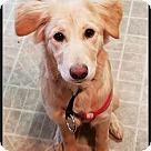 Adopt A Pet :: Daisy