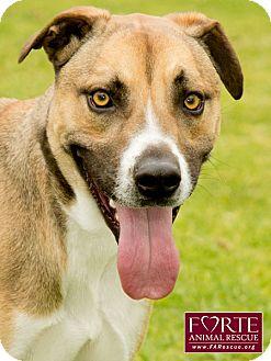 Australian Cattle Dog/Greyhound Mix Dog for adoption in Marina del Rey, California - Cody