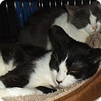 Adopt A Pet :: Rosemary, Nutmeg and Dori - Bear, DE