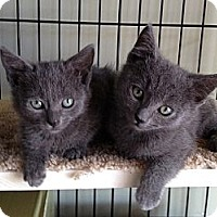 Adopt A Pet :: Bella & Misty - Island Park, NY