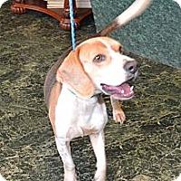 Adopt A Pet :: George - Houston, TX