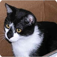 Adopt A Pet :: Kane - Wakinsville, GA