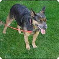 Adopt A Pet :: Stella - Phoenix, AZ