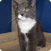Adopt A Pet :: K-Yvonne3-Tipton - Colorado Springs, CO