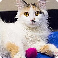 Adopt A Pet :: Gigi - Chicago, IL