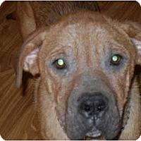 Adopt A Pet :: Chesney - Newport, VT