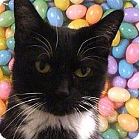 Adopt A Pet :: Alexis - Albany, NY
