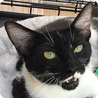 Adopt A Pet :: Loquacious - Winchester, CA