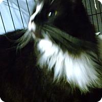 Adopt A Pet :: Princess - Centralia, WA