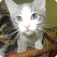 Adopt A Pet :: Toast - Medina, OH